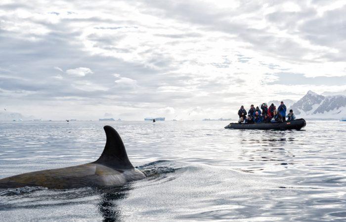Antarctica_Peninsula_©ChristopherScholey©_{legend}_activities(whale-watching)____20180205_120409_550_[6992x4666]_30MB