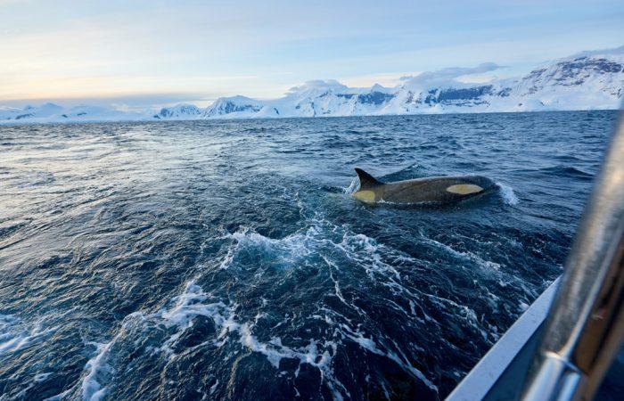Antarctica_Peninsula_©ReeveJolliffeEYOS©_{legend}_yachtlife()____20190116_200041_990_[7360x4912]_11MB